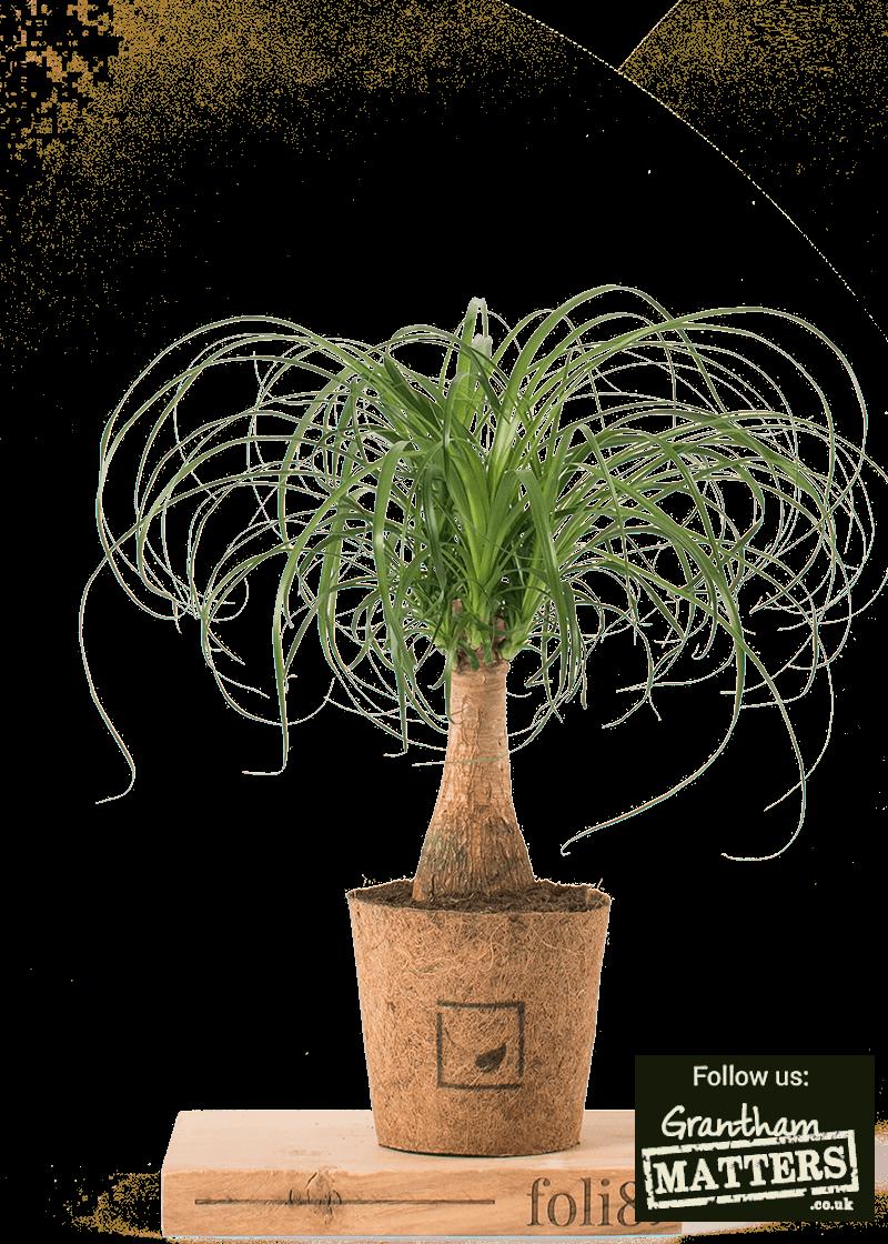 Propagating common houseplants